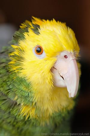 Spikey Parrot