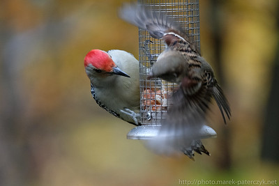 Standoff in the feeder