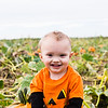 Pumpkin patch - October 2015