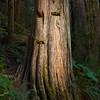 Humble tree