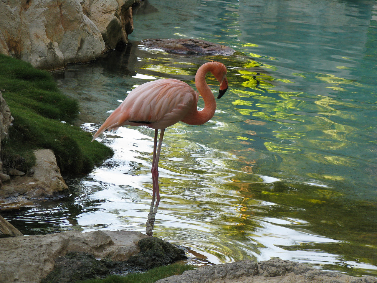 A flamingo in Acapulco.