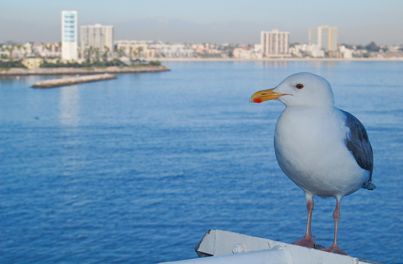 Our old friend the Sea Gull looking out over Long Beach.