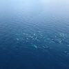 Beluga whales spotted from plane