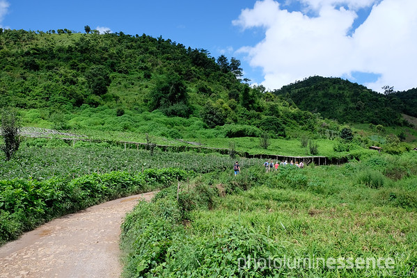 The fields of Kalaw