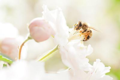 Bees Macro 2012