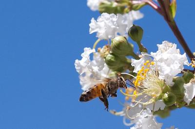 Bees Macro