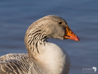The Goose Eye