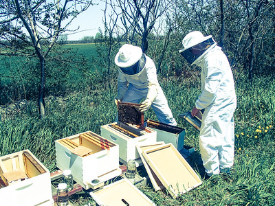 Noah and me placing the bees in their new hives