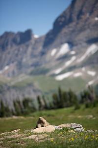 The marmot, the diva.