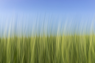 Blurry Grass
