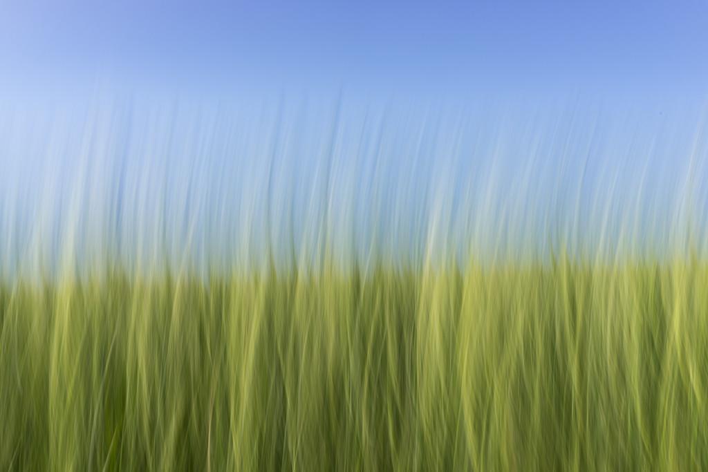 Blurry Grass