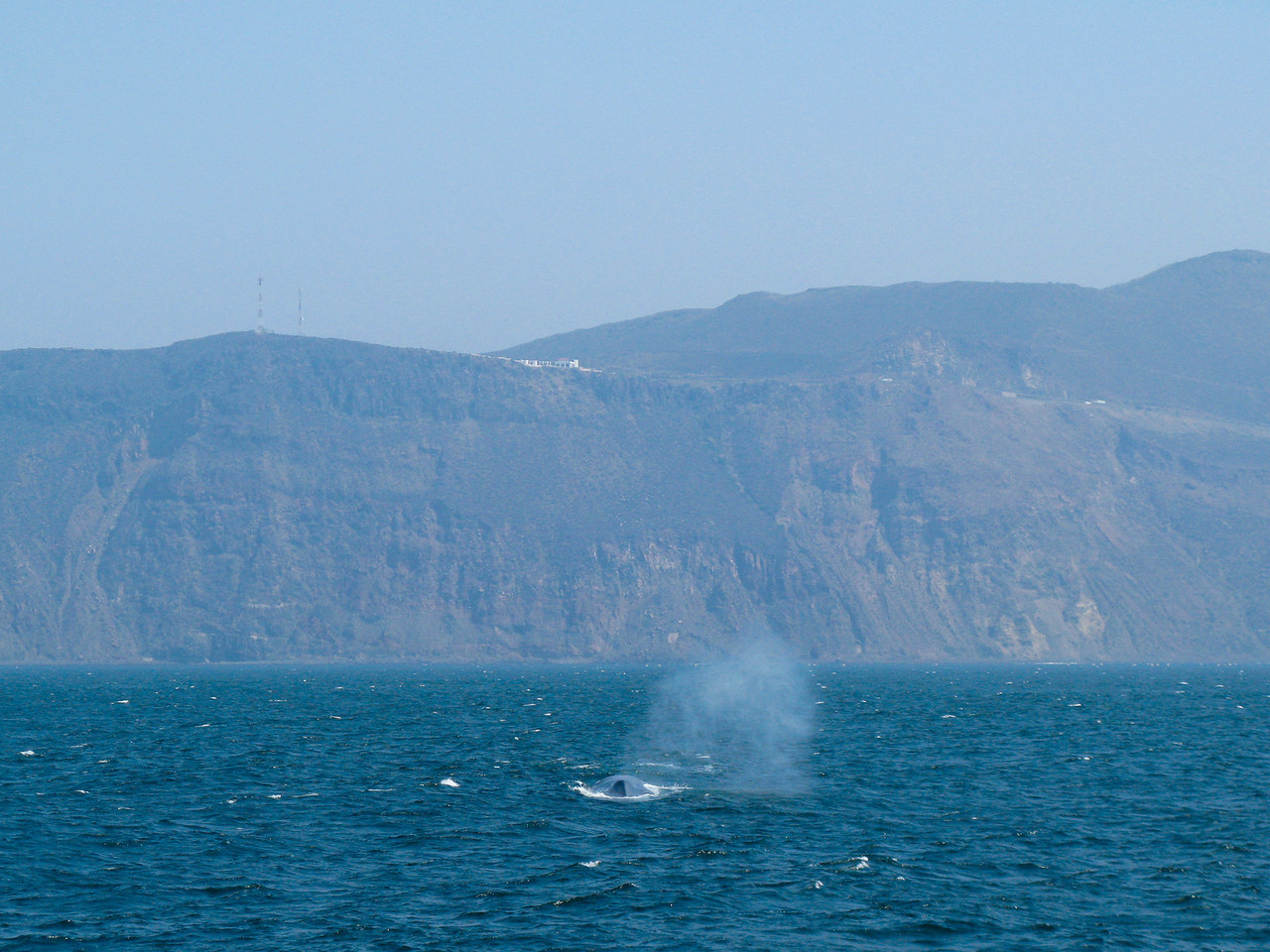 A Blue Whale somewhere off the coast of Mexico between Ensenada and the US border. Taken on July 16, 2008 with a Canon A720IS point and shoot.