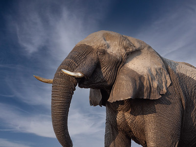 Looking up with Elephants