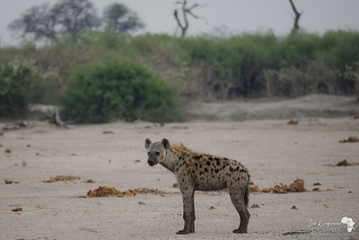 First Light - First Hyena