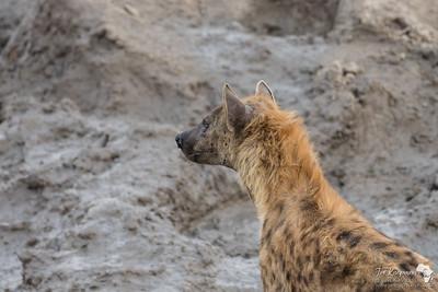 Hyena Mane