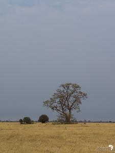 Across the Dry Marsh