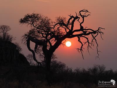 Spooky sunrise