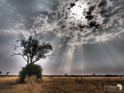Dramatic Rays over Botswana's dry marshes
