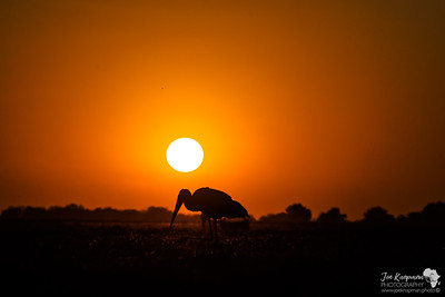 Sunset and Stork