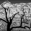 Tree Silhouette on Sedona Mountain in B&W