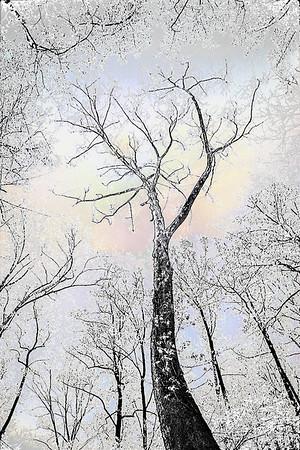 Trees in Harmony