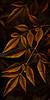 Nandina Branches, Stylized