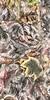 Leaves #150 - Pleasant Pastel Series