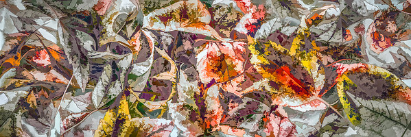 Leaves #77 - Graphic Grandeur Series