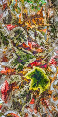 Leaves #82 - Graphic Grandeur Series