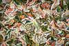 Leaves #172 - Suspicious Spectrum Series