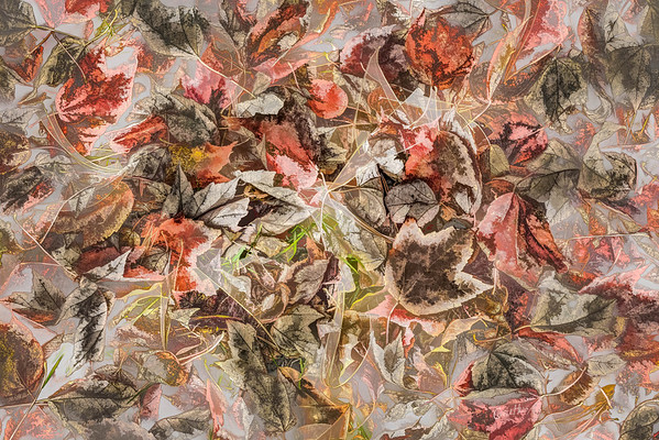 Leaves #2 - Translucent Tendency Series