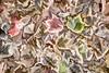 Leaves #161 - Subtly Soft Series