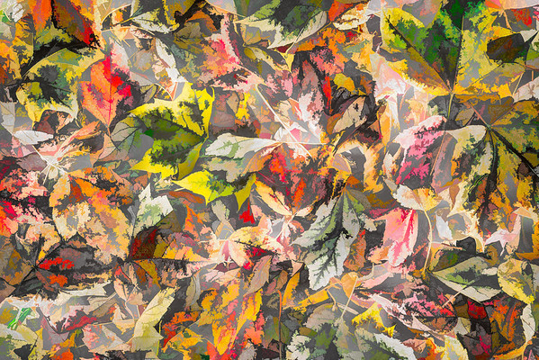 Leaves #19 - Color Craving Series