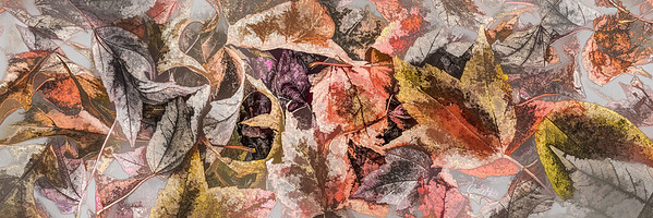 Leaves #10 - Translucent Tendency Series