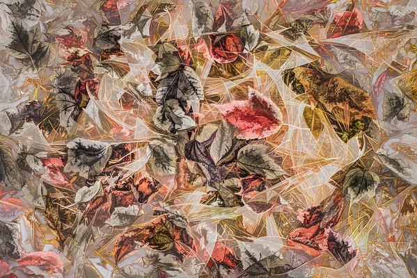 Leaves #1 - Translucent Tendency Series