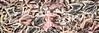 Leaves #143 - Pleasant Pastel Series