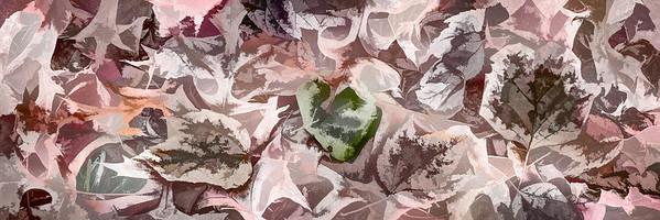 Leaves #167 - Subtly Soft Series