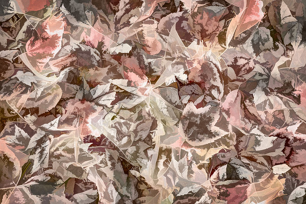 Leaves #156 - Subtly Soft Series