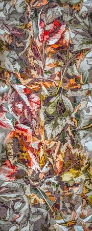 Leaves #86 - Graphic Grandeur Series