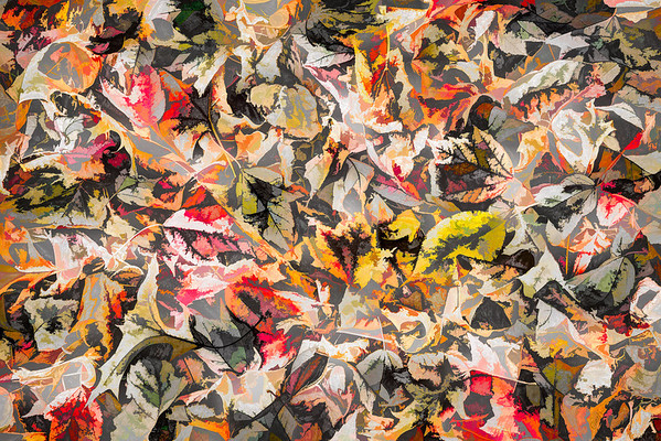 Leaves #18 - Color Craving Series