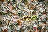 Leaves #185 - Suspicious Spectrum Series
