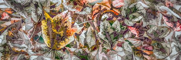 Leaves #78 - Graphic Grandeur Series