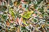 Leaves #176 - Suspicious Spectrum Series
