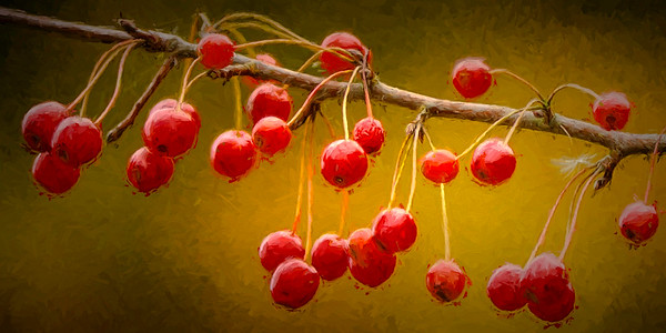 Fall Berries (Painterly)
