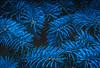 Flora Color Series - Blue