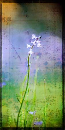 """""""Rustic"""" Wildflower"""