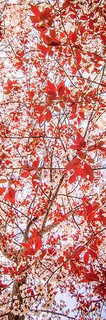 Plum Tree Blossoming #4