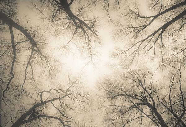 Rock Creek Park Trees in Fog