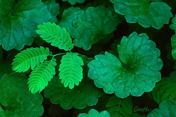 Flora Color Series - Green