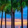 Fiery Sunset Through the Palms